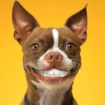 dog-teeth-cleaning