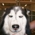 funny-dog-face